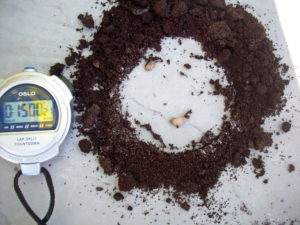Natural slug repellent that WORKED: Used Coffee