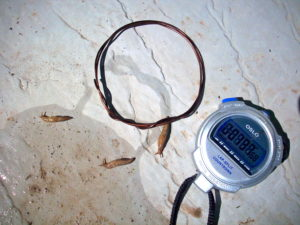 Natural slug repellent that DIDN'T WORK: Copper Wire