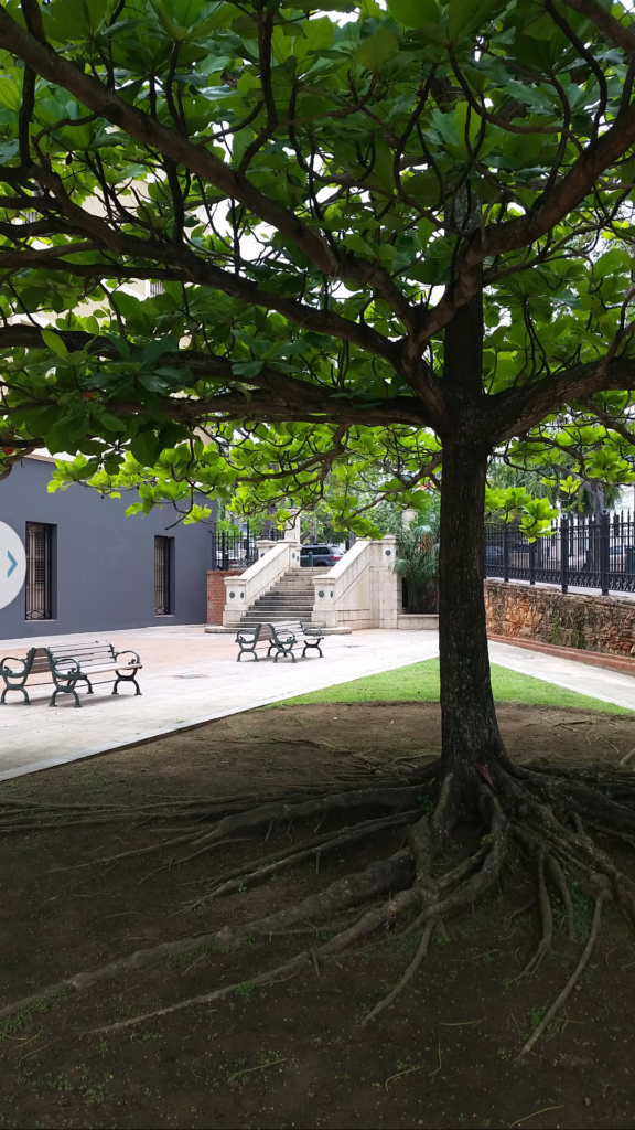 Tree and Benches outside Ballad Barracks, Puerto Rico