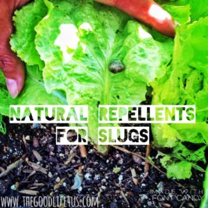 Slug Repellents