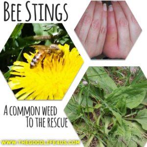 BeeStings